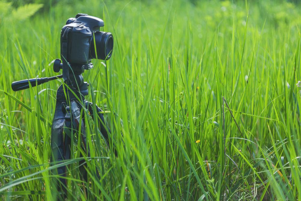 Do Camera Tripods Fit All Cameras